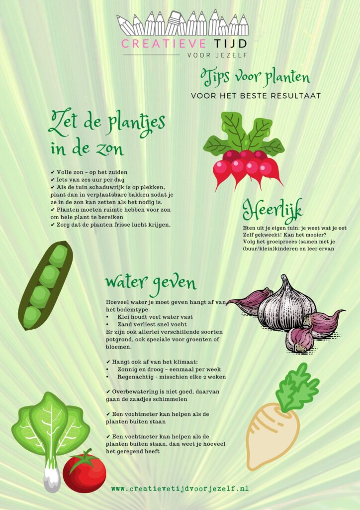 tips voor een eigen groententuin
