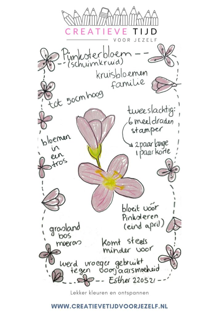 pinksterbloem